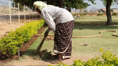 Woman brooming dry grass and leaves in garden. Stock Footage