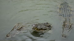 Crocodile swimming pool center in the rain, crocodile farm In Thailand. Stock Footage