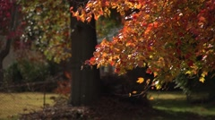 Trees in the fall - stock footage