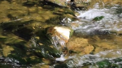 stream in forest ,clean fresh cold water,artistic video background - stock footage