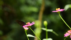 Butterfly is pollinated flowers in the garden. Stock Footage