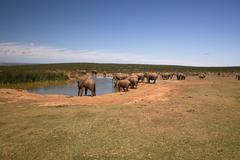 Africa Watering Place Elephants Herd - stock photo