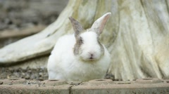 Rabbit sitting in the ground. Stock Footage