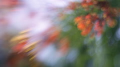 Unusual nature out of focus background. Stock Footage