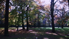 Early Morning in a City Park Stock Footage