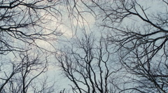 Bare Tree Branches on a white pale sky Stock Footage
