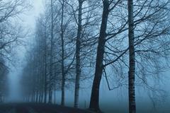 Foggy tree alley. Stock Photos