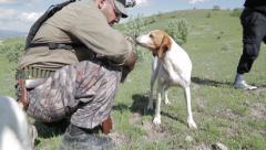 Partridge Huntind Dog Stock Footage