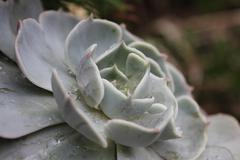 Succulent - stock photo