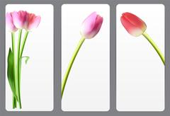 Stock Illustration of Beautiful Floral Cards with  Realistic Tulip Vector Illustration