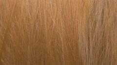 Golden human hair close-up panning 4K 2160p UHD video - Blonde shiny woman ha - stock footage