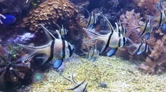 Group of fish Stock Footage