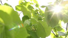 Sunlight In The Leaves 2 Stock Footage