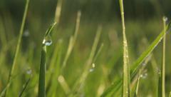 Dew on the grass. Moisture, drops, morning, nature - stock footage