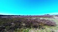 I am walking on the moors where heather blooms - stock footage
