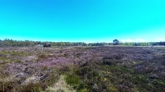 I am walking on the moors where heather blooms Stock Footage