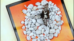 Dainty swallow tail butterflies on pumice table Stock Footage
