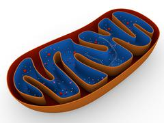 Mitochondrion - stock illustration