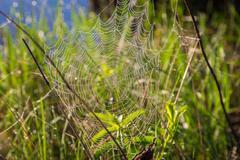 Shiny dew on spiderweb - stock photo