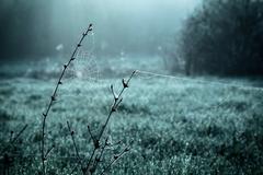 Dew on spiderweb - stock photo