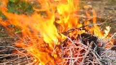 Dry twigs on fire, close-up Stock Footage