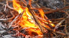 Burning dry branches Stock Footage