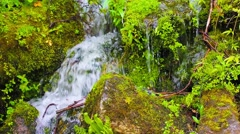 Small stream with fresh spring growth, footage Stock Footage