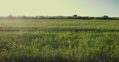 4K aerial footage of green fields in the sun set. Camera sees windmills at the e Stock Footage