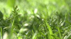 Grass Close Up Stock Footage