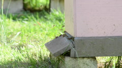 Man Made Bee Hive Stock Footage