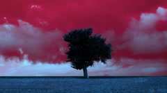 Winter landscape,lonely tree in meadow,storm clouds timelapse Stock Footage