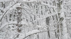 Snow falling in leafless deciduous forest Arkistovideo