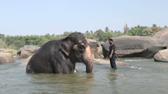 Elephant standing up in the river. Stock Footage