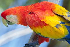 Old red parrot outdoor at park - stock photo
