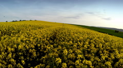 Drone flying sideways above rapeseed crop fields Stock Footage