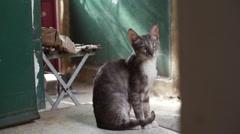 Cat sitting at entrance, long shot Stock Footage