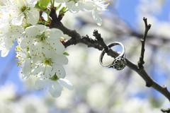 ring on background spring flowering fruit trees - stock photo