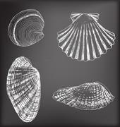 Shells Stock Illustration