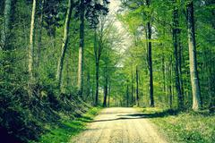Stock Photo of Road in the forest at springtime
