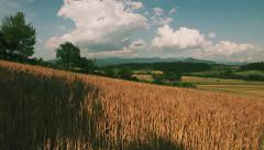 Romanian grain fields - montage - stock footage
