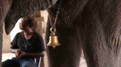 Close view of bell hanging on an elephant's neck. Stock Footage