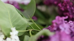 A bouquet of lilacs Stock Footage