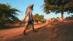 Herders with cows, goats and lamps on dusty road of Bagan site in Myanmar Stock Footage