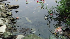 Earthquake reflecting o a pond water Stock Footage