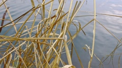 Plants growing near water Stock Footage