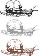 Snail - stock illustration