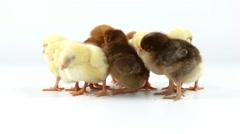 Stock Video Footage of Sleepy newborn chickens