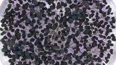 Time-lapse of rotating and drying aronia berries, top view Stock Footage