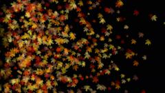 4k Maple leaf leave falling&flare light,autumn fall romantic particle artistic. Stock Footage