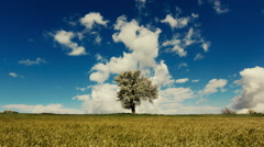 Spring/summer landscape tree on meadow sky and clouds timelapse - stock footage